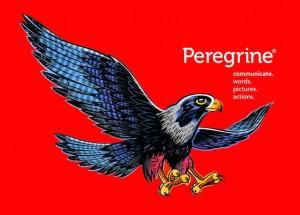 the-peregrine-bird